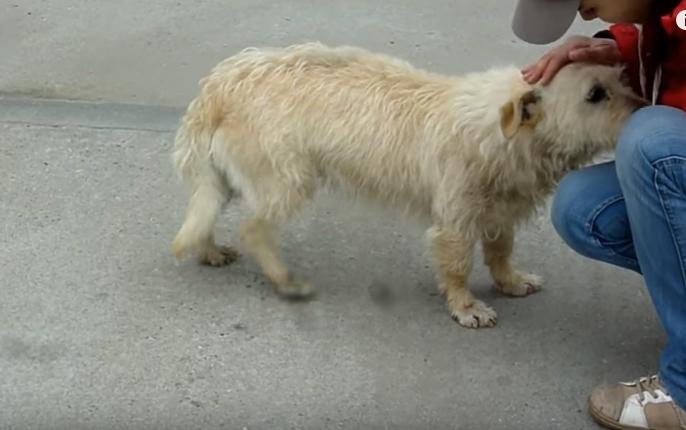 transformacion-perro-rescatado11