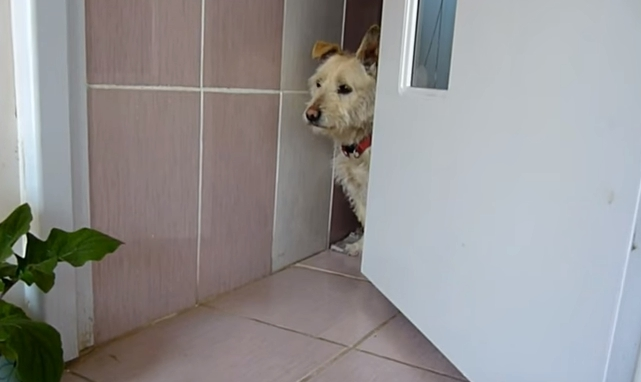 transformacion-perro-rescatado13