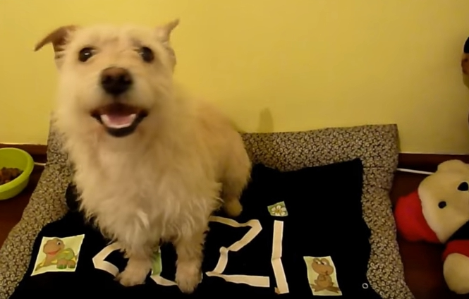 transformacion-perro-rescatado15