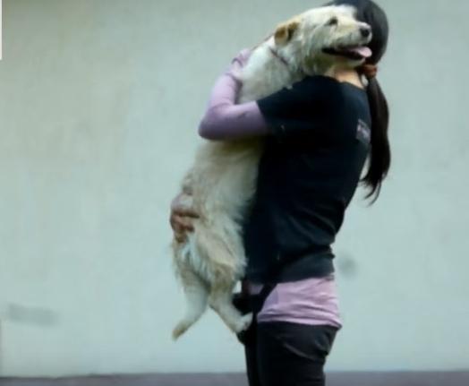 transformacion-perro-rescatado19