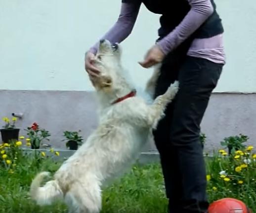 transformacion-perro-rescatado21
