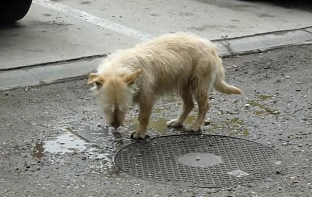 transformacion-perro-rescatado3