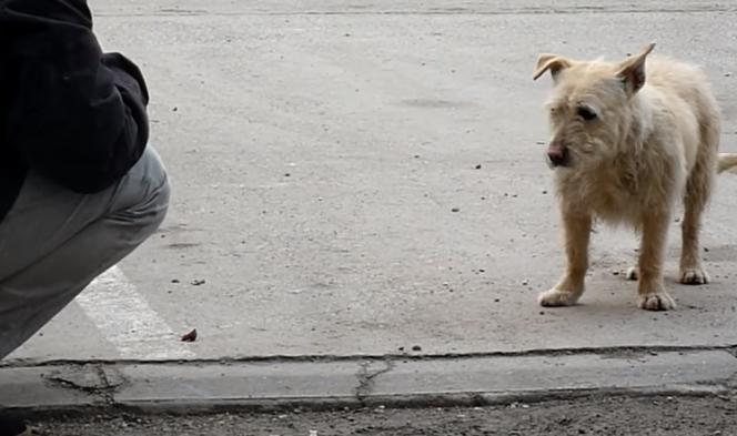 transformacion-perro-rescatado4