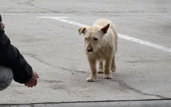 transformacion-perro-rescatado5
