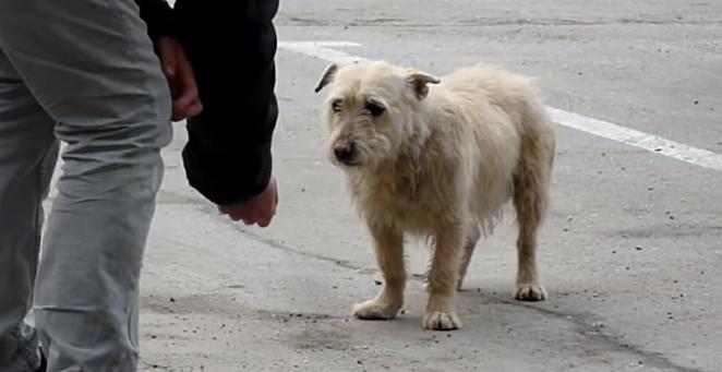 transformacion-perro-rescatado6