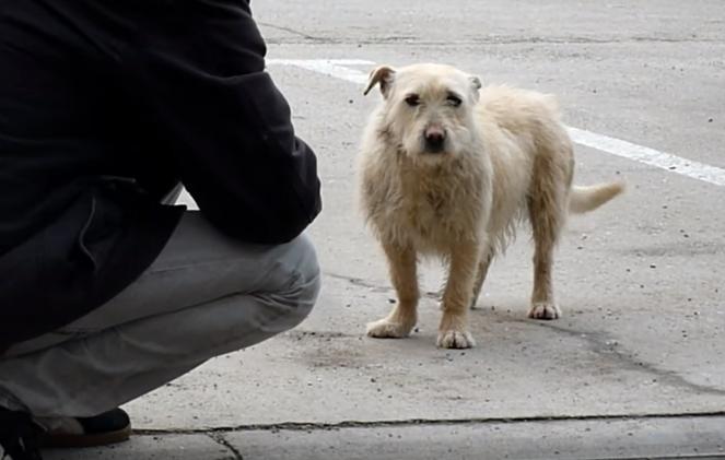 transformacion-perro-rescatado7