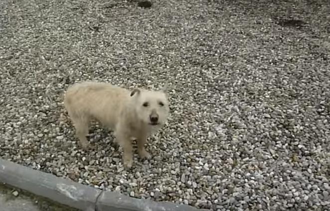 transformacion-perro-rescatado8