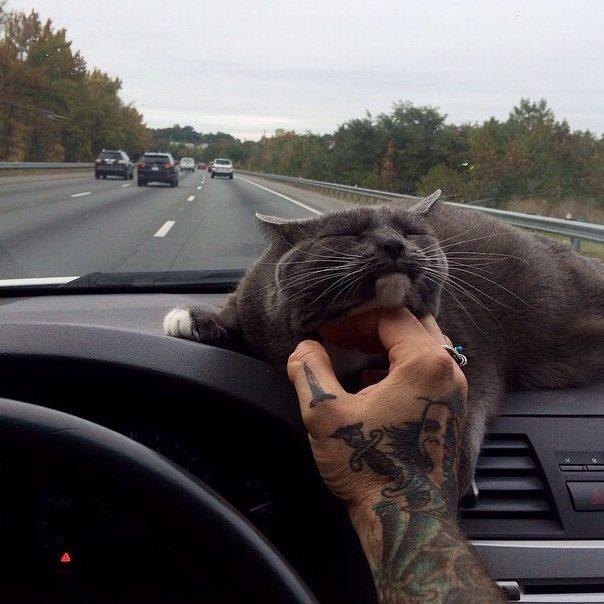 14 fotos de gatos mejor amigo del hombre 1