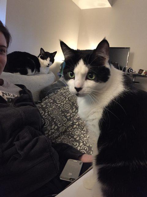 14 fotos de gatos mejor amigo del hombre 2