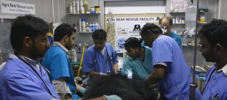 19 Osos rescatados