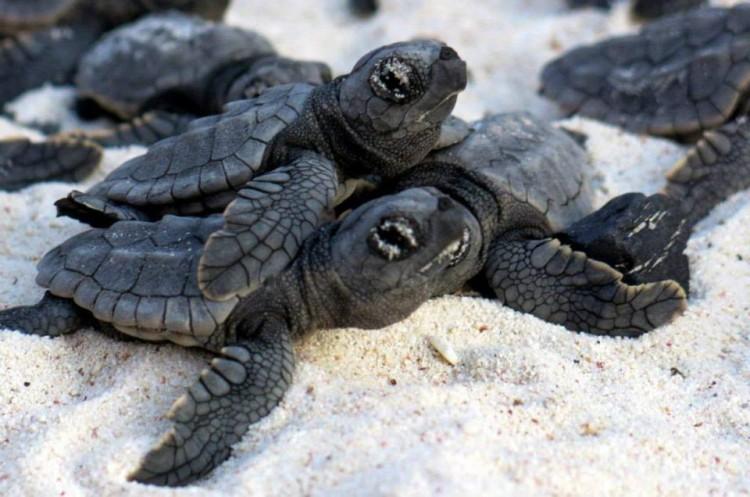 1pared-humana-tortugas