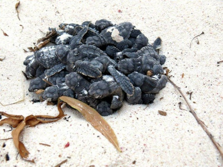 3pared-humana-tortugas