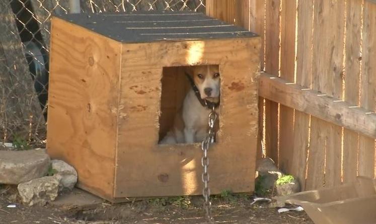 45 perros rescatados 1