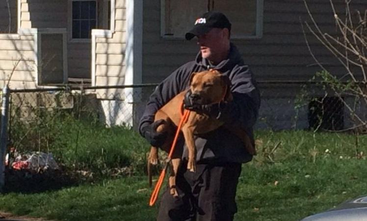 45 perros rescatados 6