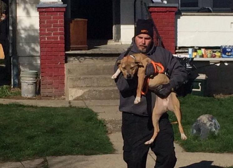 45 perros rescatados 9