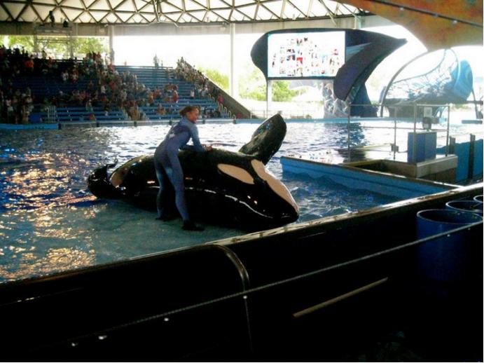 Kyuquot orca seaworld