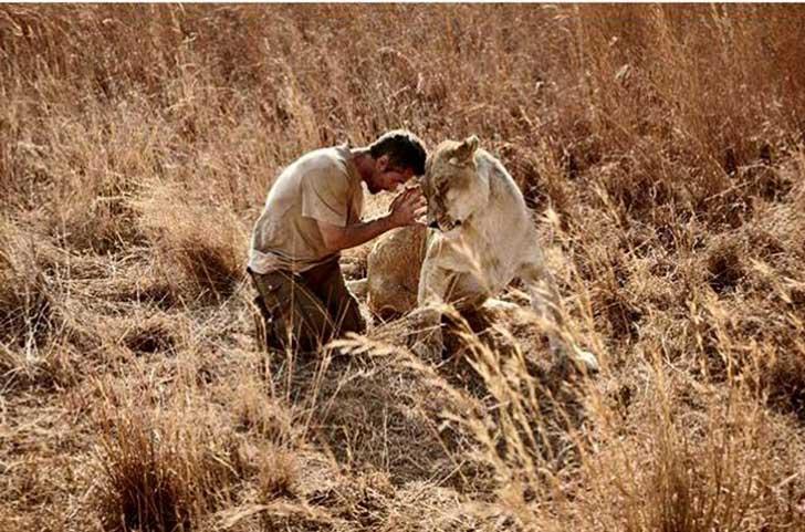 Leones abrazan a hombre 55