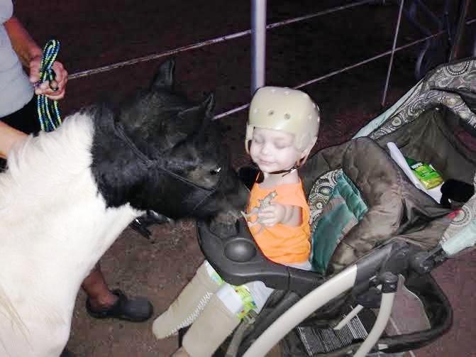 Mini caballo ayuda a niño 1