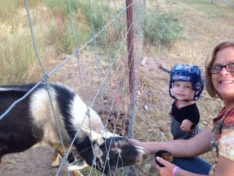 Mini caballo ayuda a niño 17