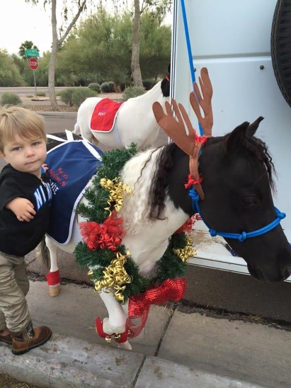 Mini caballo ayuda a niño 19