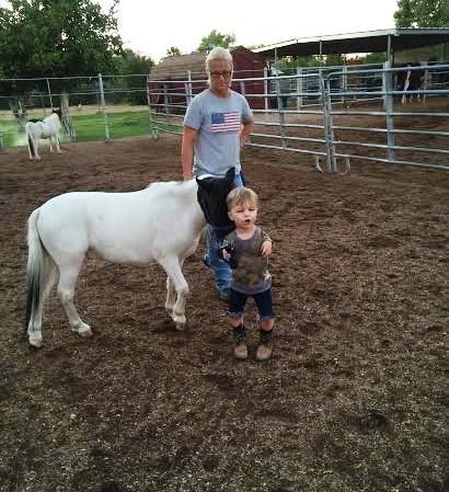 Mini caballo ayuda a niño 2