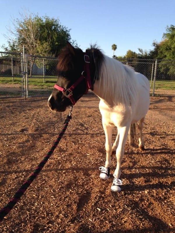 Mini caballo ayuda a niño 21
