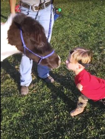 Mini caballo ayuda a niño 8