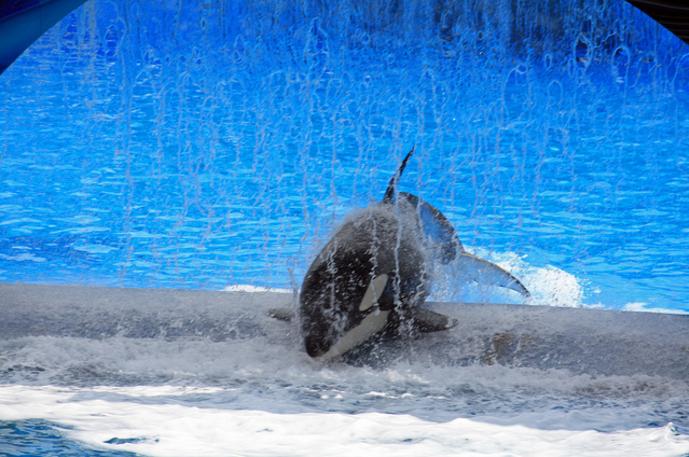 Nalani orca seaworld
