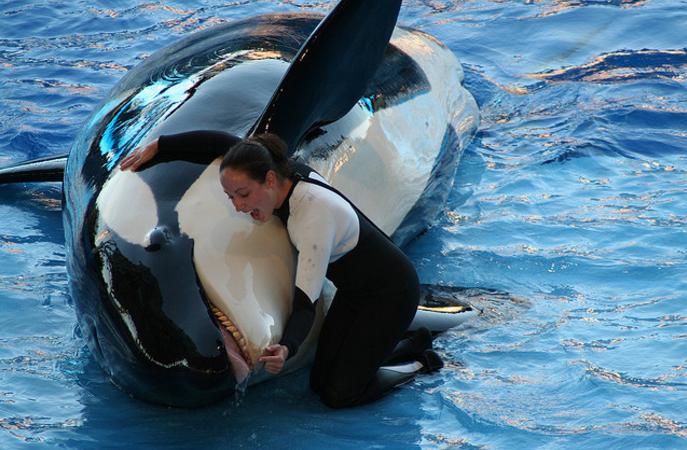 Takara seaworld orcas