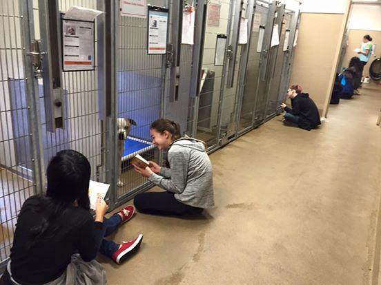 adolescentes leen a perros en refugio 1