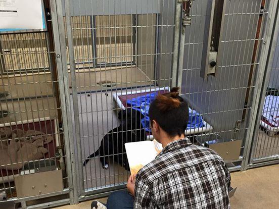 adolescentes leen a perros en refugio 3