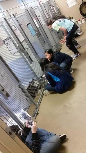 adolescentes leen a perros en refugio 7