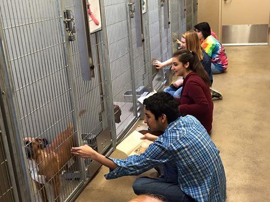 adolescentes leen a perros en refugio 8