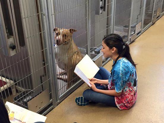 adolescentes leen a perros en refugio 9