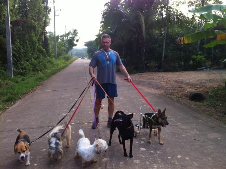 alimenta-perros-en-tailandia10