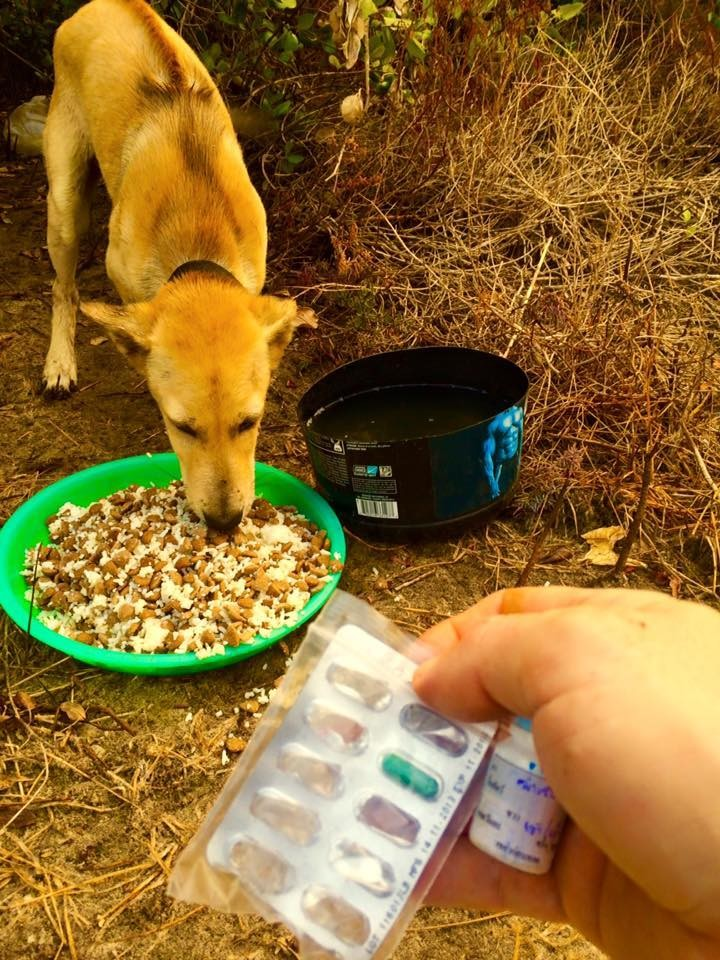 alimenta-perros-en-tailandia4