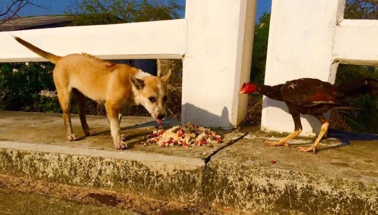 alimenta-perros-en-tailandia5