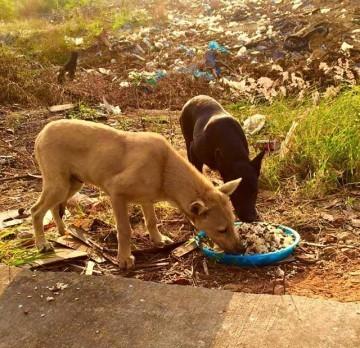 alimenta-perros-en-tailandia6