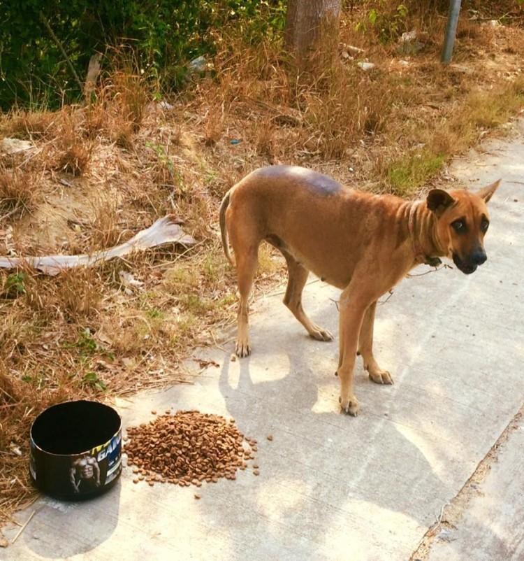 alimenta-perros-en-tailandia9