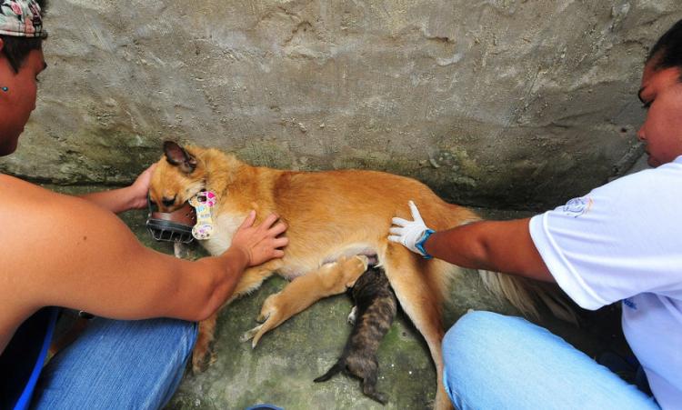 animales-rescatados-ecuador-2