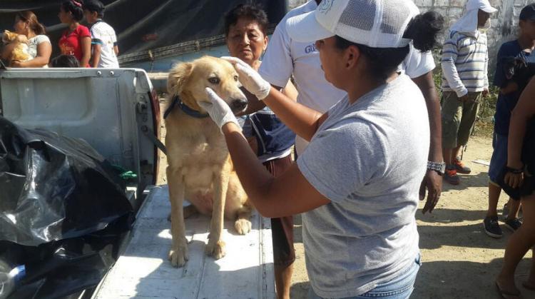 animales-rescatados-ecuador-3