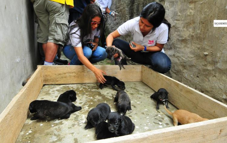 animales-rescatados-ecuador-5