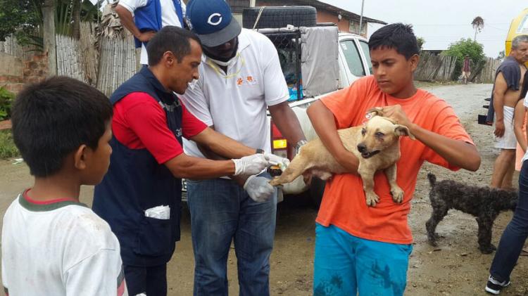animales-rescatados-ecuador-7
