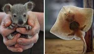 animalitos-bebes