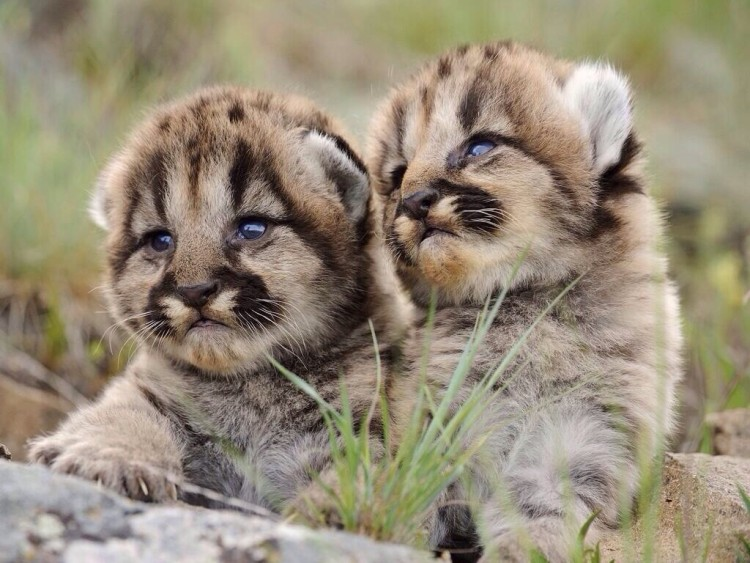 animalitos-bebes1