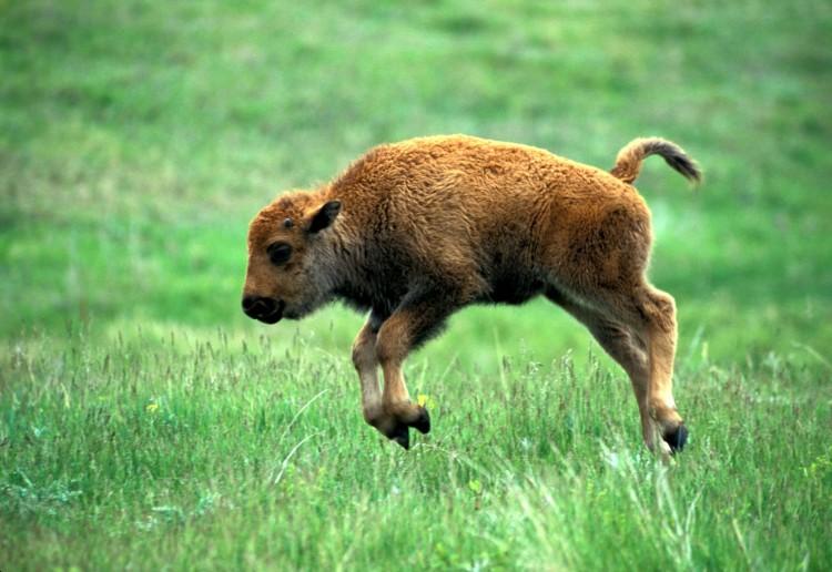 animalitos-bebes16
