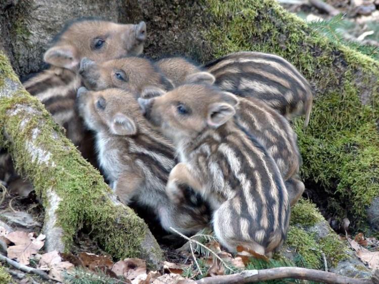 animalitos-bebes17