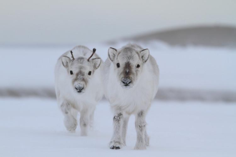 animalitos-bebes18