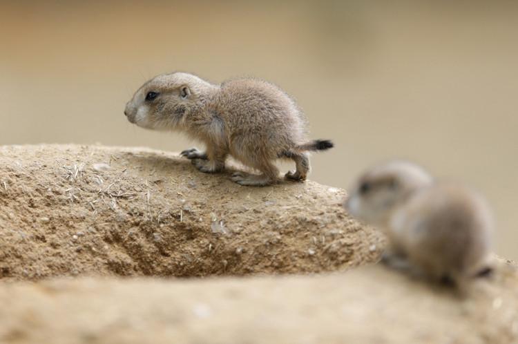 animalitos-bebes19