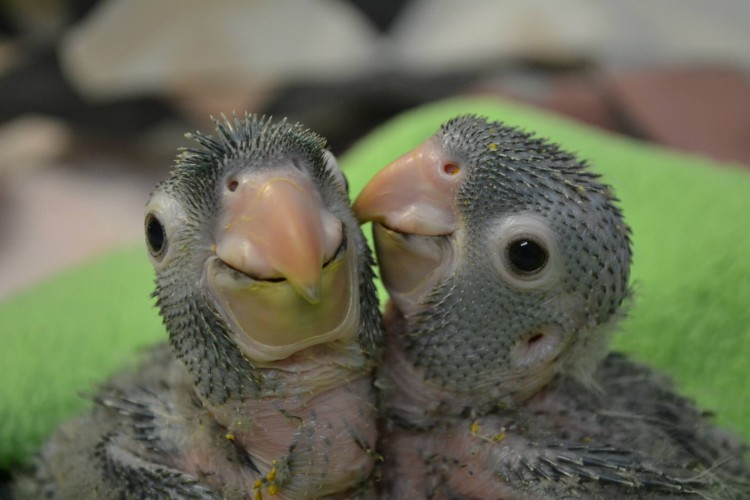 animalitos-bebes3